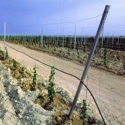 Vinohradnický sloupek koncový 50x50 mm, výška 270 cm